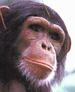 CBSE scientists contribute to analysis of chimp genome