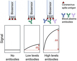 A new serological assay for measuring antibody levels in blood samples uses an optical biosensor to provide complete quantitative results in less than 20 minutes. (Image credit: R. DuBois)
