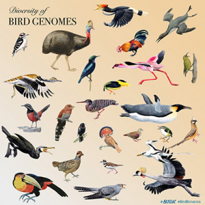 Comparative genomics sheds new light on the diversity of birds and other vertebrates. (Image credit: Jon Fjeldsa/Josefin Stiller/University of Copenhagen)