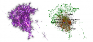Left: A 3D volume color-map visualization of the geometric structures recovered from Gensim Continuous Skipgram embedding of Wikipedia 2017 (300k tokens). Right: Structure-guided exploration of the intermediate neighborhood of the noun research, highlighting the discovered tokens (red) from among all tokens (green). Tokens are discovered by structure-guided agents that stochastically explore the embedding space.
